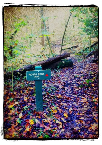CCC Snipe Trail & Mossy Rock Bike Trail Intersection