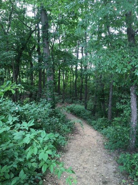Path through forest margin