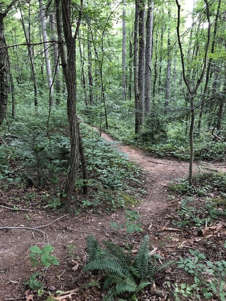 Nicely wooded trails in the Richmond Hill Park