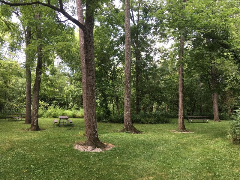 One of the picnic areas in the woods