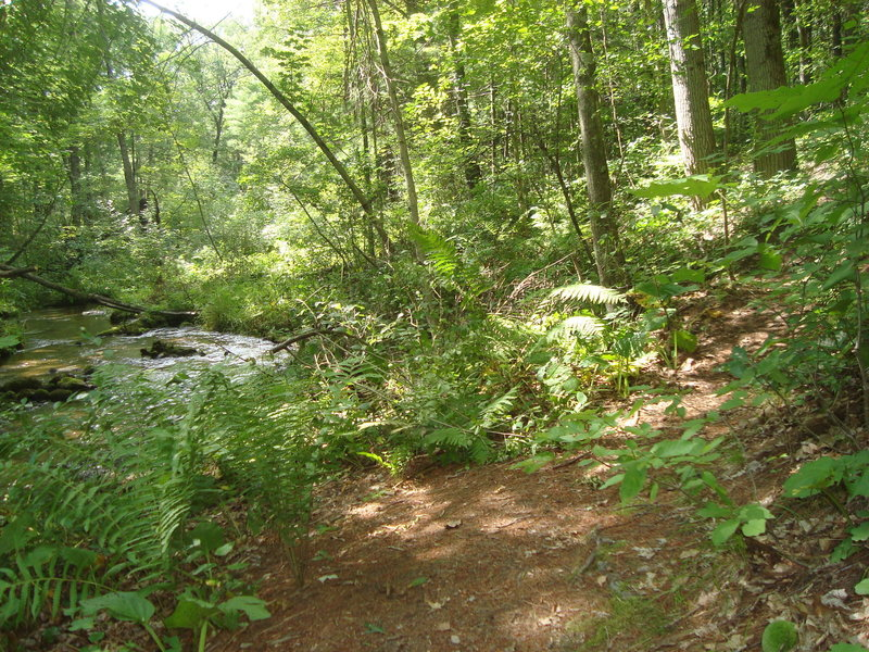 Foot trail at Silver Creek Campground with Silver Creek on the left.
