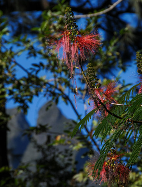 Grand peaks and beautiful tree-based red flowers can be found at the lower elevations in Mafate.