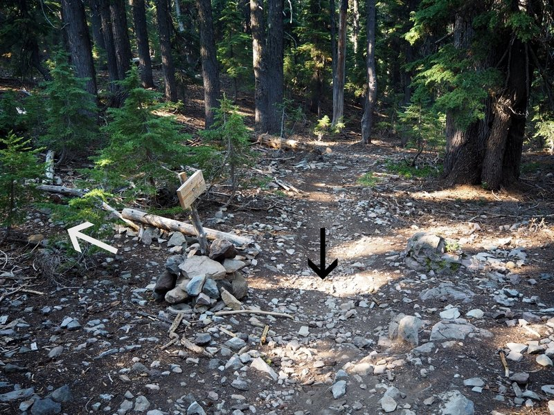 Looking downhill at the signed junction of the Clover Creek Cut-off Trail (white arrow) and the Clover Creek Trail (black arrow).