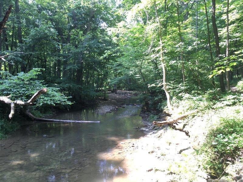Creek crossing on the Birch Trail