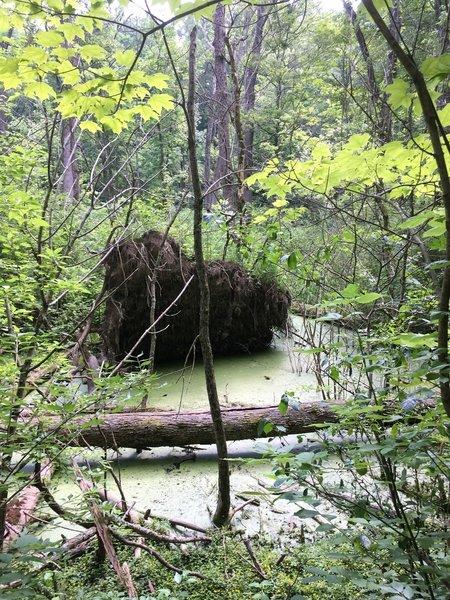 Shallow Bog on the Inman
