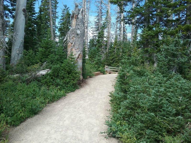 Begininng of trail