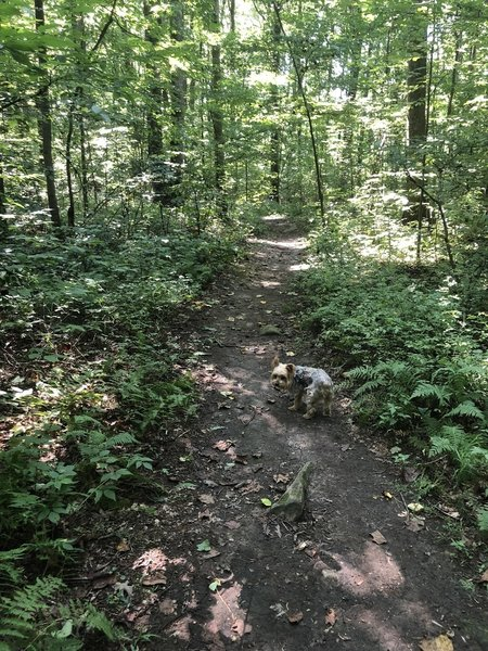 Walking on the trail
