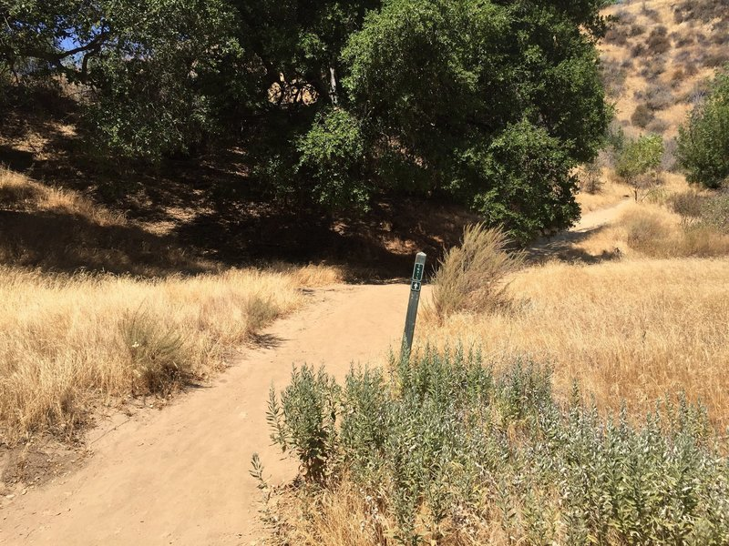 Trail split - this is where you want to turn sharp right to the trail post that says 'Trail 1.1mile'.