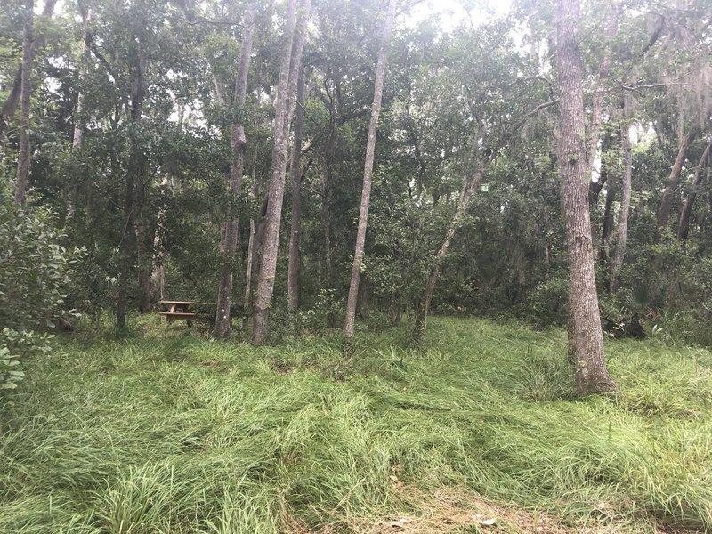 picnic spot along the trail