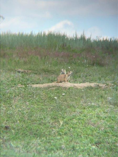 Prairie Dog Town sightings