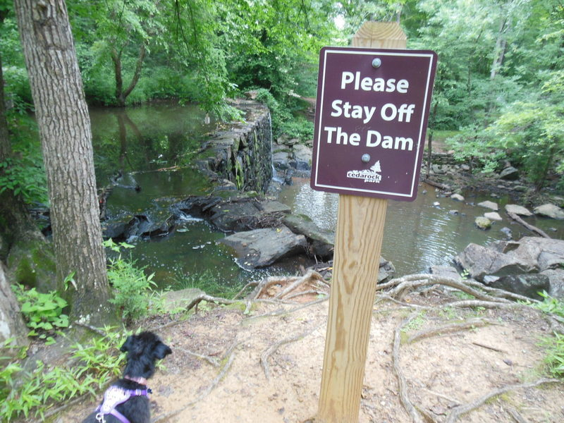 Trying to keep Parker off the dam.