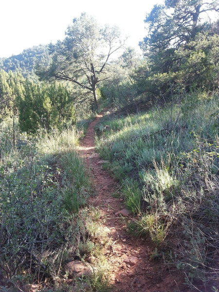 Majority of trail is singletrack but obvious