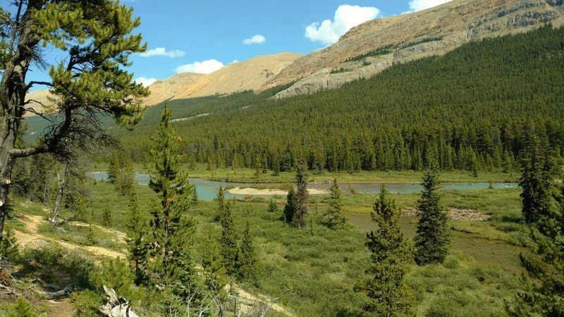 The Brazeau River runs through wet meadows dotted with firs, below an unnamed ridge, along the South Boundary Trail.