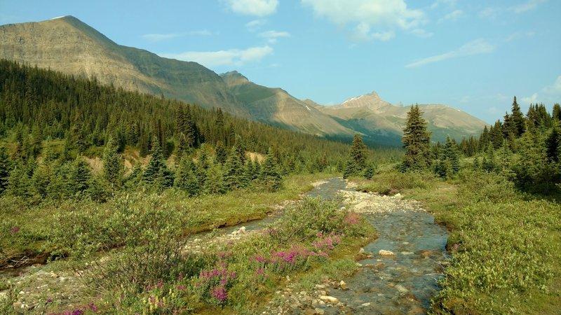Pobokton Creek near the Poboktan Pass/Jonas Pass trail junction, on a perfect July morning. Looking northwest.