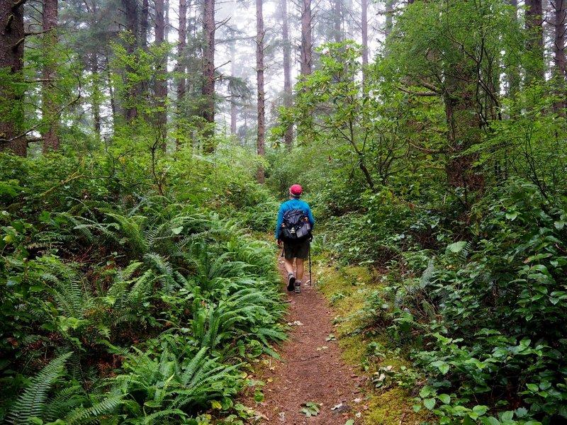Lush undergrowth along the Threemile Lake Trail.