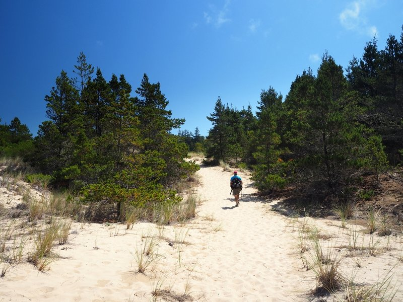 Passing through the shore forest on soft sand