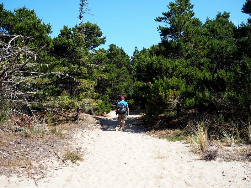 Hiking through the shore pines