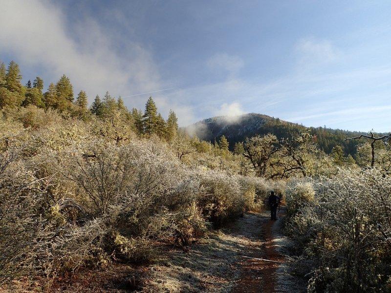 Passing through the buckbrush in winter