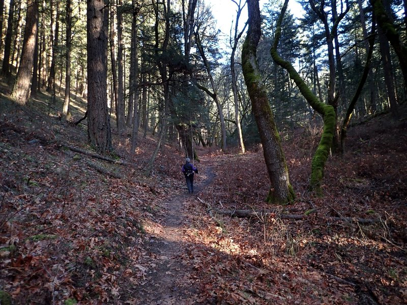 Hiking through the enchanted forest