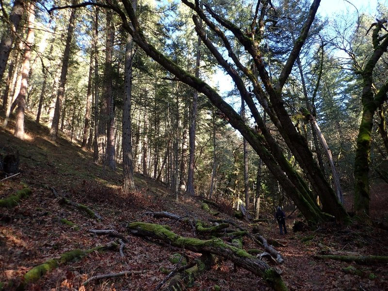Hiking under the over-arching forest