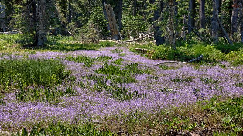 Wildflowers near a meadow.