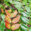 Colorful flora a little bit in advance of Autumn.