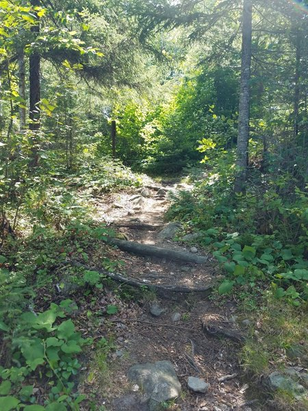A look at the trail.