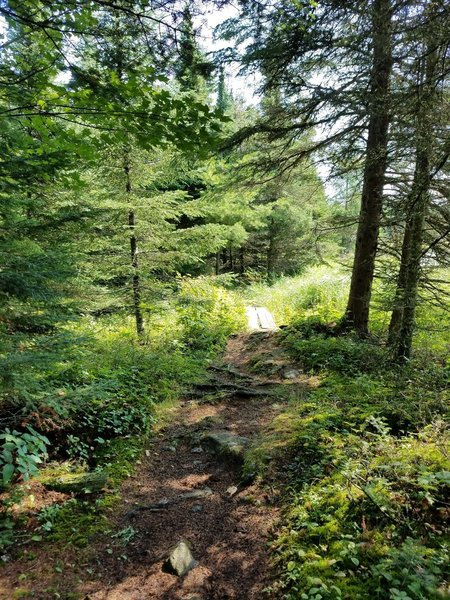 Section of trail around the beaver pond.
