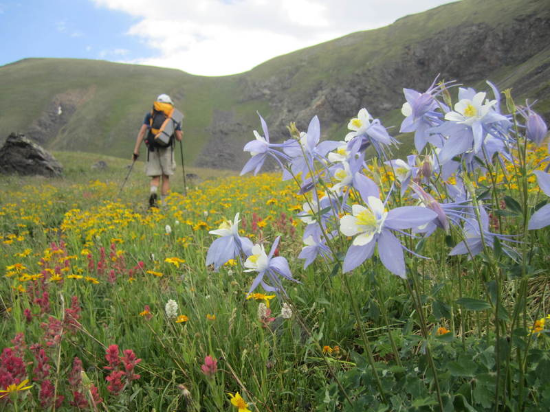Columbines on Bowen Pass.