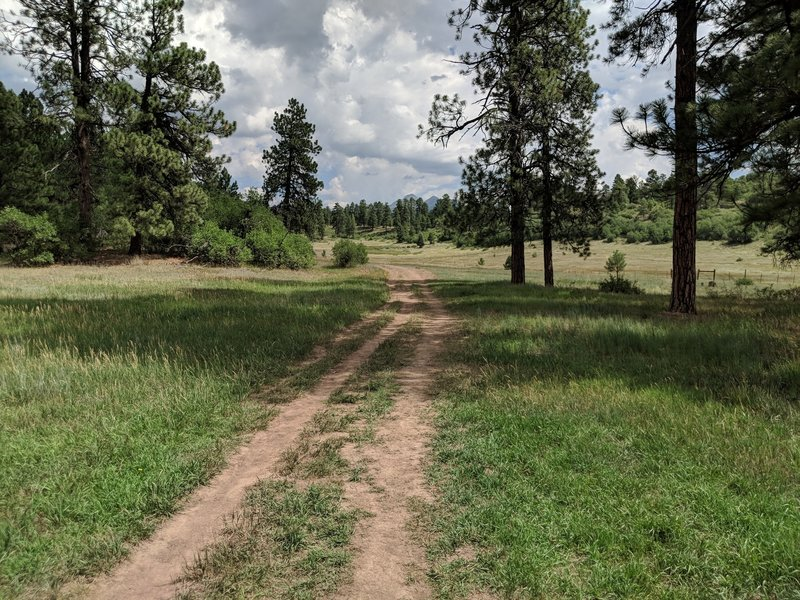 Coyote Hill Loop Trail - going counter-clockwise
