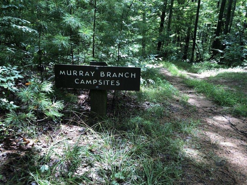 Murray Branch Campsites
