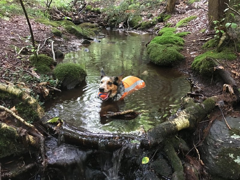 The Tree ID Trail has a nice little creek for the pups to cool off.