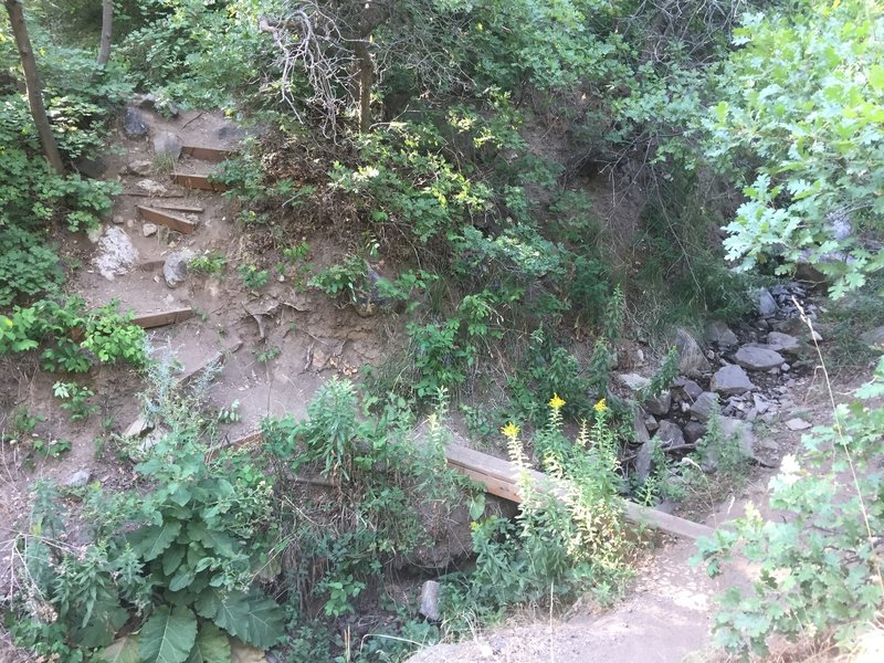 The stairs go down-canyon. Here is the plank bridge at a fork, either path of which merges back on itself. After crossing the bridge, go left for the grotto, or right for some craggies.