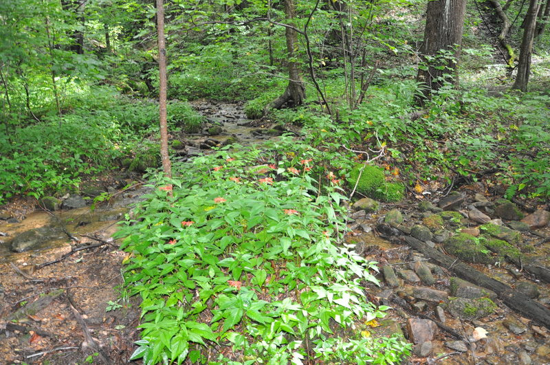 One of the 26 stream crossings and nice stand of Crimson beebalm.