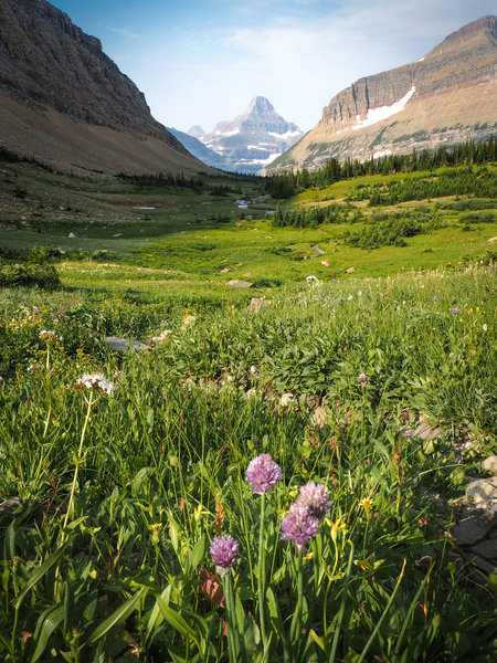 Beautiful wildflowers looking out towards the renowned Montana mountains. In valley below Siyeh Pass.