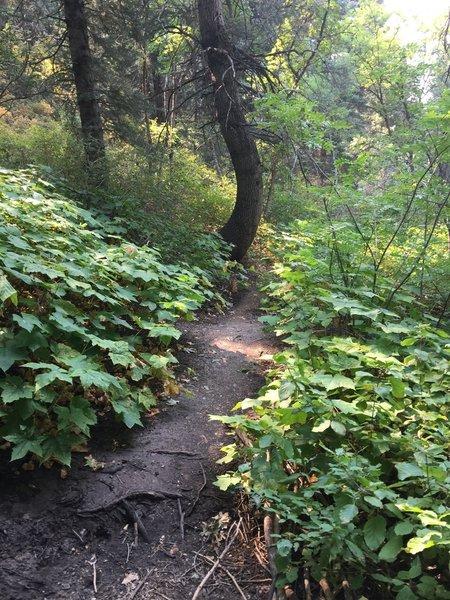 Fun foliage along the trail.