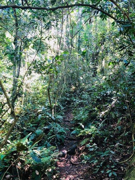 Path going upwards through island jungle