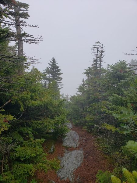 A spur trail looking east off a nearby summit