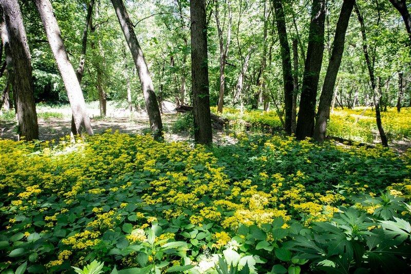 Fields of flowers near Davis Ferry