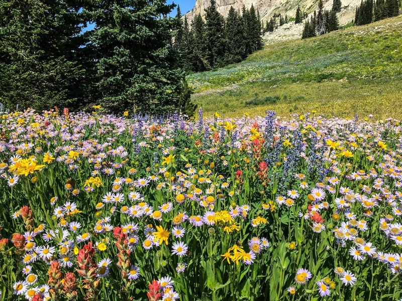 So much wildflower diversity!