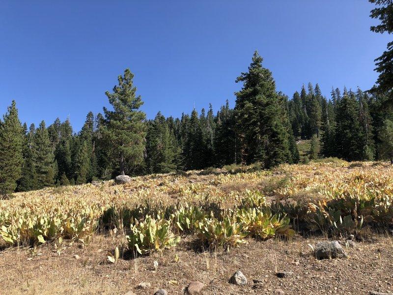 Meadow near beginning of hike