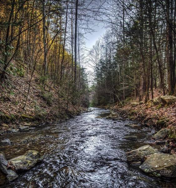 Bruce Creek