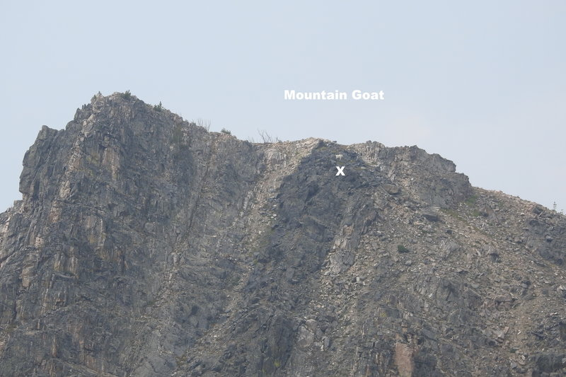 Mt Goat just below ridge and just above the X. This is view with no magnification from glacial lake at head of the trail, slowly feeding along the mountain for at least 20 minutes.