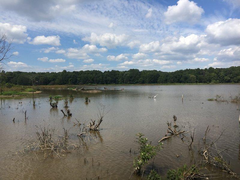 Wetlands vista (with crane)