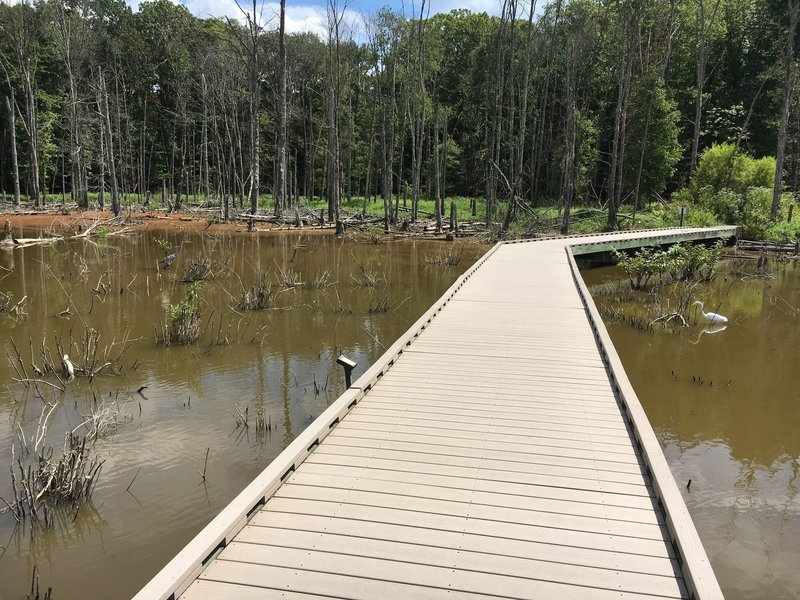 Blue heron on the left of the boardwalk, crane fishing on the right!