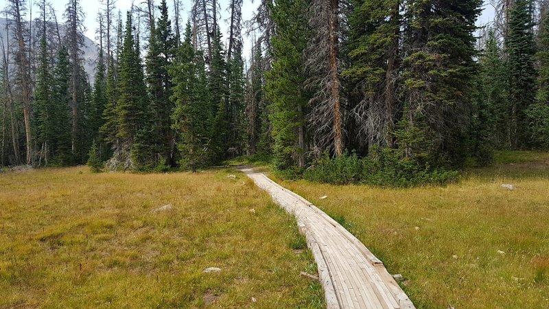 The Trail Through a Meadow