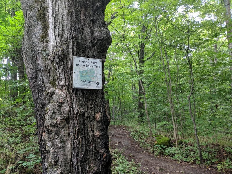 High Point on Bruce Trail