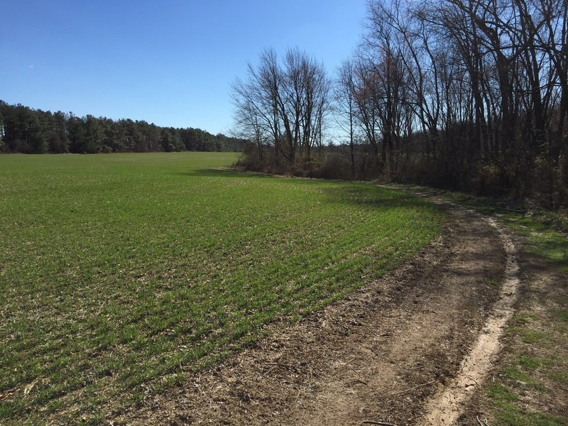 A field on the Little Jersey Trail
