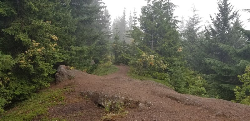 This is what the beginning of the spur trail looks like.