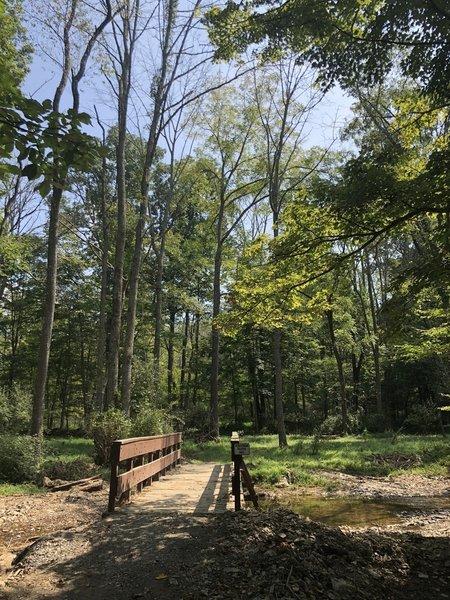Bridge crossing along the trail